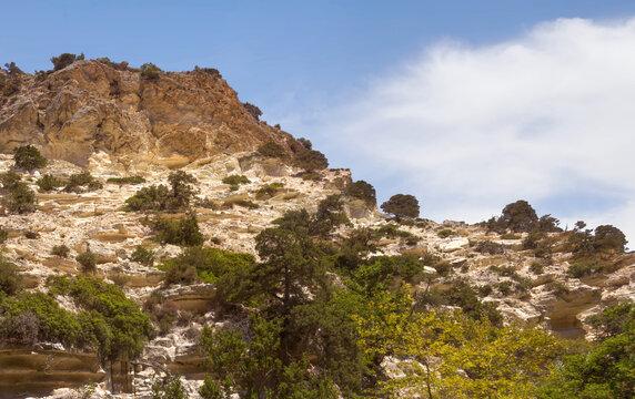 Vegetation on a steep mountain wall. Avakas Gorge, Akamas peninsula, Cyprus.