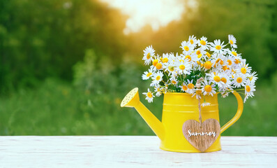 daisy flowers and heart in yellow watering can, natural background. rustic floral composition in garden. summer blossom season. copy space