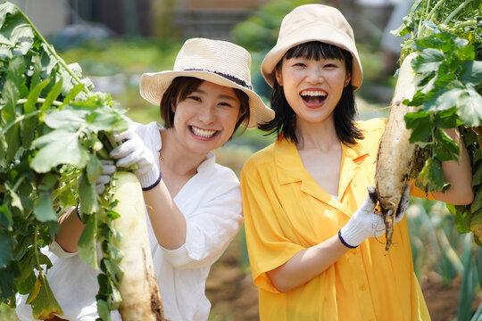 大根を収穫する女性