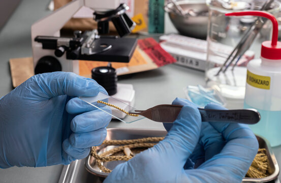 Forensic police analyse golden cord under microscope in crime lab, conceptual image