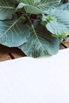 Cabbage background wallpaper. Green eco bio concept. Minimalist