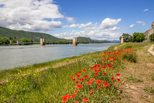 The Robinet bridge on the Rhone at Donzere with a bed of poppies in the foreground