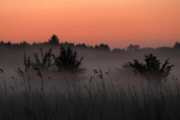 Świt z lasem w tle - fototapety na wymiar