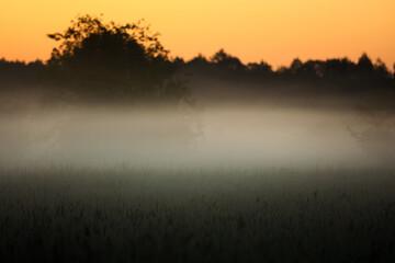 świt i mgła - fototapety na wymiar