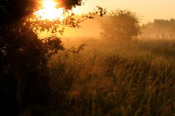 widok zza drzewa o wschodzie z mgłami i promieniami słońca
