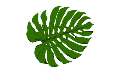 swiss cheese plant leaf vector graphic green leaf element isolated on white Background