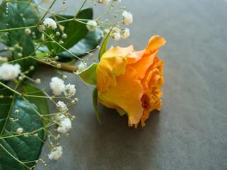 Fototapeta Róże w kolorze herbacianym  obraz