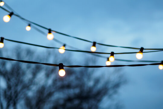 white string lights on tree in front of blue sky