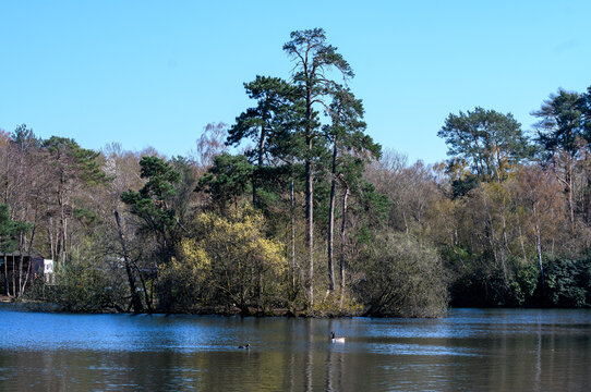 Califonia Country park lake