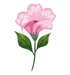 Fototapeta light pink flower with leaves obraz