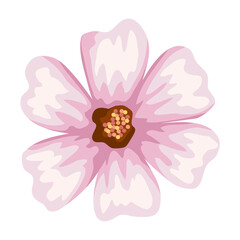 Fototapeta light pink flower obraz