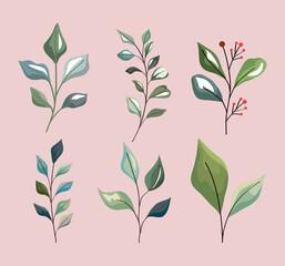Fototapeta Plant leaves symbol set obraz
