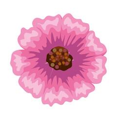 Fototapeta Isolated pink flower obraz