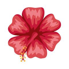 Fototapeta red hawaiian flower obraz