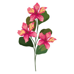 Fototapeta orchid flowers with leaves obraz