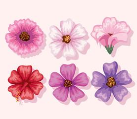 Fototapeta flowers symbol set obraz