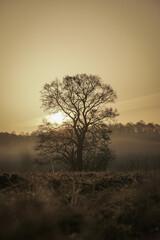 Lonely tree at sunrise  - fototapety na wymiar