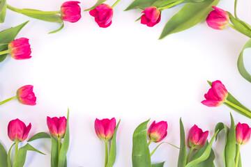Różowe, kwitnące tulipany dookoła na białym tle