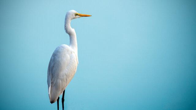An egret scanning the water body amidst dense fog