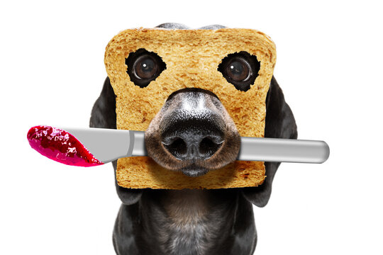 breakfast toast dog early in the morning
