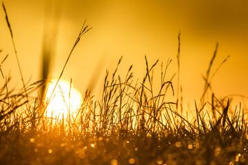 Fototapeta Wschód słońca na stawach obraz