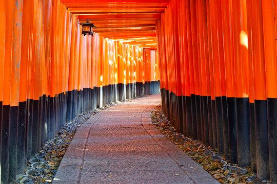 Senbon Torii of Fushimi Inari Taisha in Kyoto, Japan 京都 伏見稲荷大社の千本鳥居