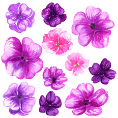 Obraz Watercolor balsam pink violet purple flower set.  Isolated rose balsam, touch-me-not flowers collection. - fototapety do salonu