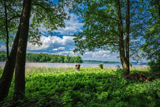 """Farne bedecken die westliche Uferzone der """"Insel Wannsee"""" bei der Badestelle """"Alter Hof"""", dahinter die Havel mit der Pfaueninsel"""