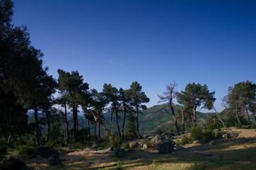 krajobraz góry natura rośliny widok wiosna