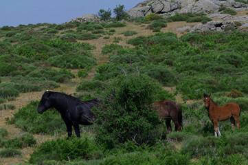 konie zwierzęta łąka pastwisko trawa zieleń rośliny