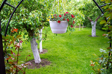 Obraz ogrodowy kwiat - fototapety do salonu