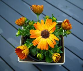 kwiat w doniczce
