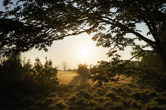 The picture shows the High Fens near Baraque Michel on the German-Belgian border at sunrise.