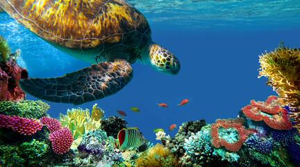 underwater sea turtle swims