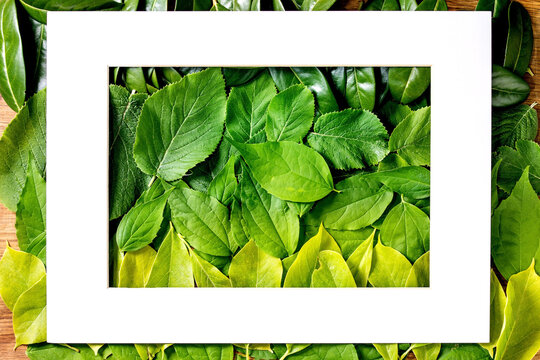 Frame on Background made of green leaves, green gradient