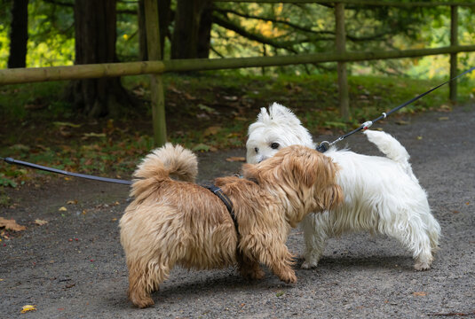 Two dogs sniff each other while walking