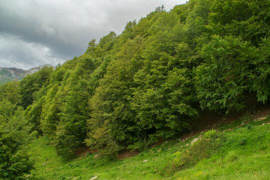 Bosque en el lado norte de los Pirineos (Borce, Francia). Paisaje de alta montaña donde se mezclan laderas boscosas y prados.