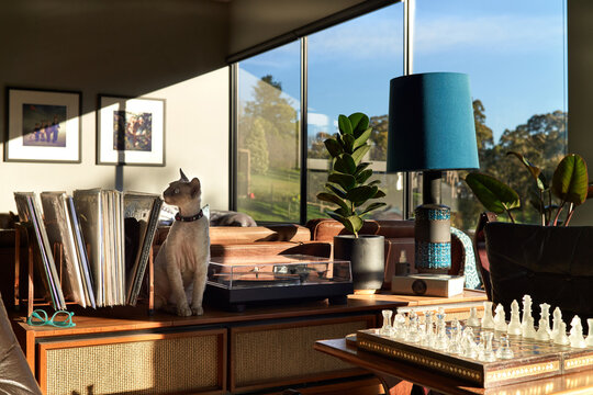 Sun-filled lounge where cat sits next to record turntable