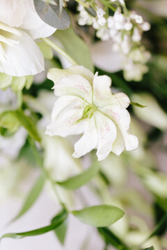 Close up details of a bouquet of white flowers and greenery on white background