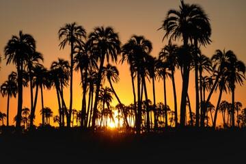 Obraz Cae el sol entre las palmas - fototapety do salonu