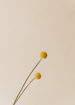Two flowers on white background