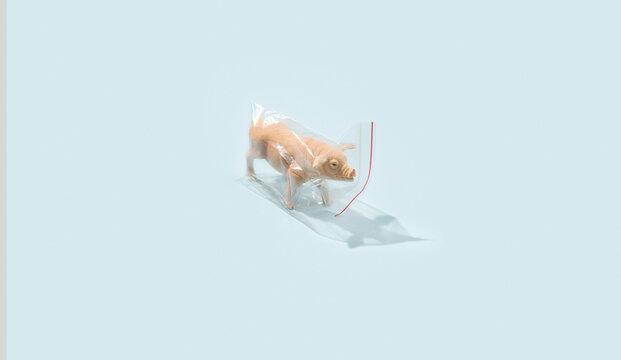 Pig toy  In Plastic Bag.