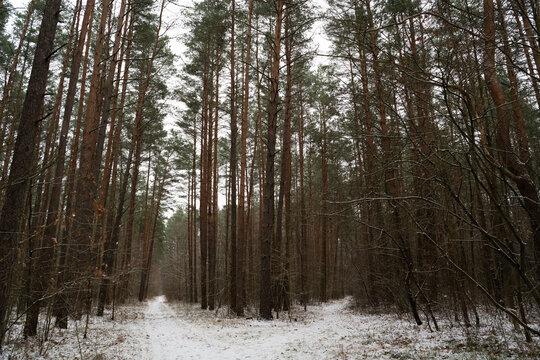 Snowy Forest Pathways