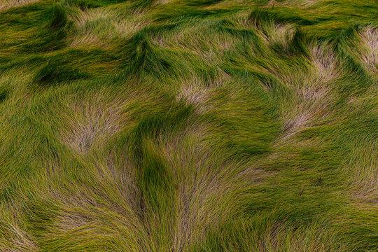 Matted Marsh Grass In Autumn Season