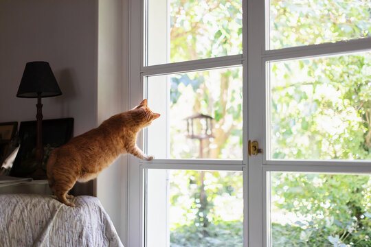 Cat watching out of window