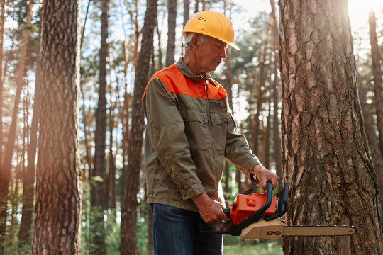 Lumberman in protective workwear and yellow helmet sawing tree with chainsaw in forest. Professional logging. Concentrated mature forester working, cutting trees in wood.