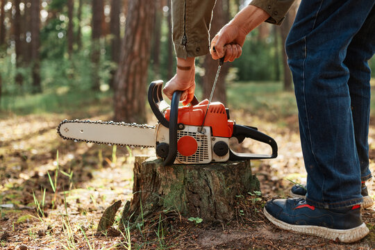 Closeup of chainsaw on wooden stump, faceless woodsman start saw, industrial destruction of trees, causing harm to the environment, deforestation.