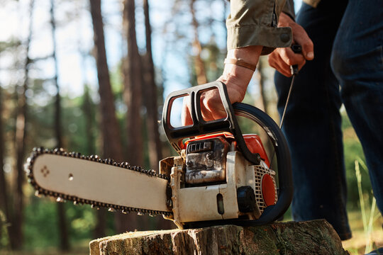 Faceless forester starting chainsaw for cutting trees in forest, planned deforestation, special equipment for logging, unknown person working in wood.