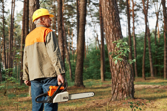 Back view of logger wearing protective helmet and uniform holding chainsaw in hands, looking around before starting deforestation, industrial destruction of trees, causing harm to the environment.