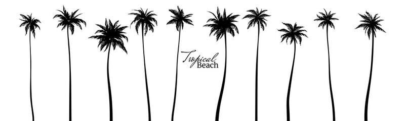 Obraz Set of black silhouettes of palm trees. Vector illustration - fototapety do salonu